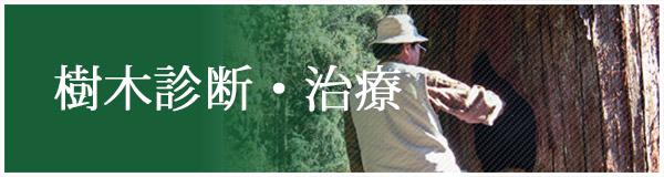 樹木診断・治療